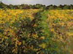 Casss Meadow