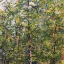 Hemlock (No. 2)